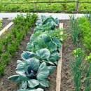 Технология выращивания овощей по Джону Джевонсу
