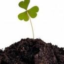 Как обогатить почву полезными веществами.