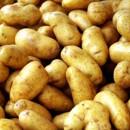 Выращивание картофеля методом «Гнездо из зелени»