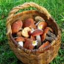 Зимний гриб или опенок зимний