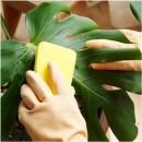 Как правильно мыть комнатные растения?