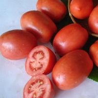 Чем болеют томаты и как их лечить