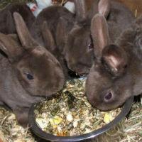 Правильное питание кроликов