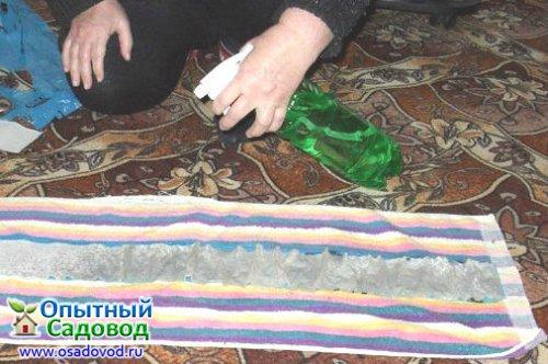Стратификация семян - Этап 3