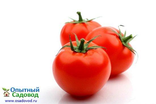 Сорт томата: Феодора f1