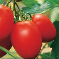 Зачем осложнять жизнь себе и томатам? Выращиваем правильно!