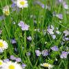 Заготовка растительного сырья: общие правила
