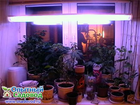 Купить Настольная лампа-лупа с бестеневой подсветкой х3