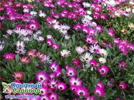 Однолетние цветы: 100 фото и названия однолетники для дачи и