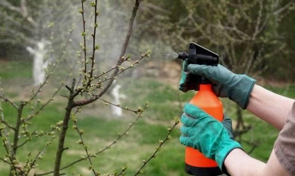 Как провести весеннюю профилактику сада