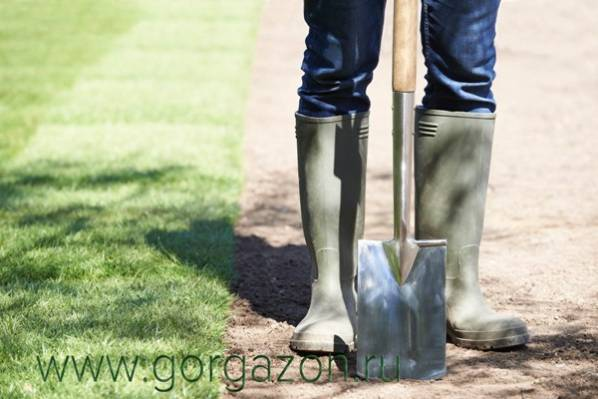 рулонный газон от компании Горгазон