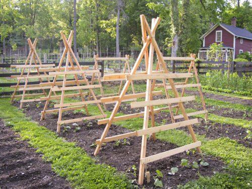 Шпалера для огурцов на деревянных стойках