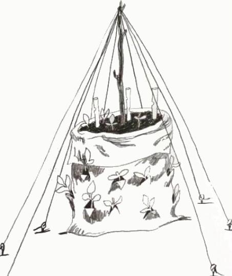 Вертикальные грядки для выращивания огурцов