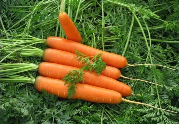 А самая ранняя морковь, самая вкусная!