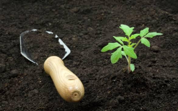 Грунт растительный, плодородный