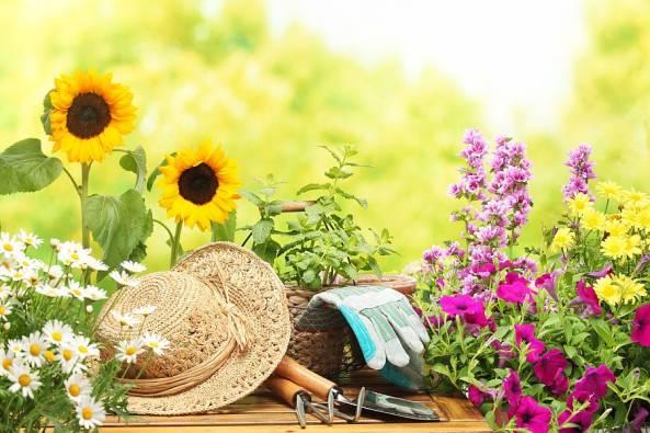 Некоторые рекомендации для садоводов и огородников