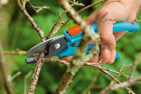 Секатор — садовый инструмент для обрезки винограда