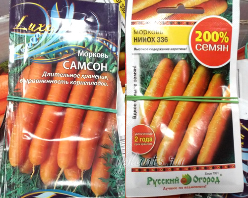 сорта для подсева под зиму моркови