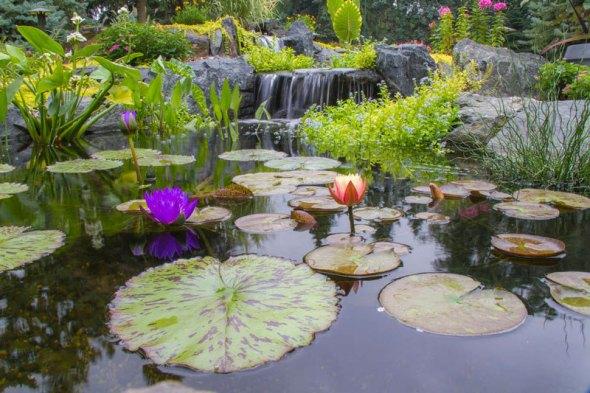 Растения у водоёма в саду