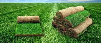Использование рулонного газона в ландшафте