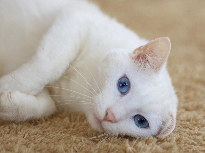 Основные правила заботы и ухода за кошками