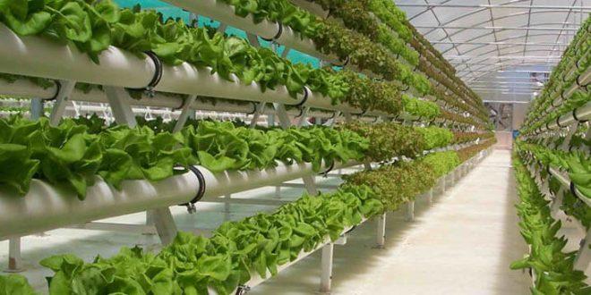 Гидропоника — выращиваем продукты круглый год