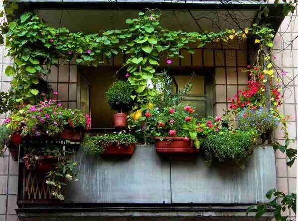 ukrashaem balkon rastenijami 2
