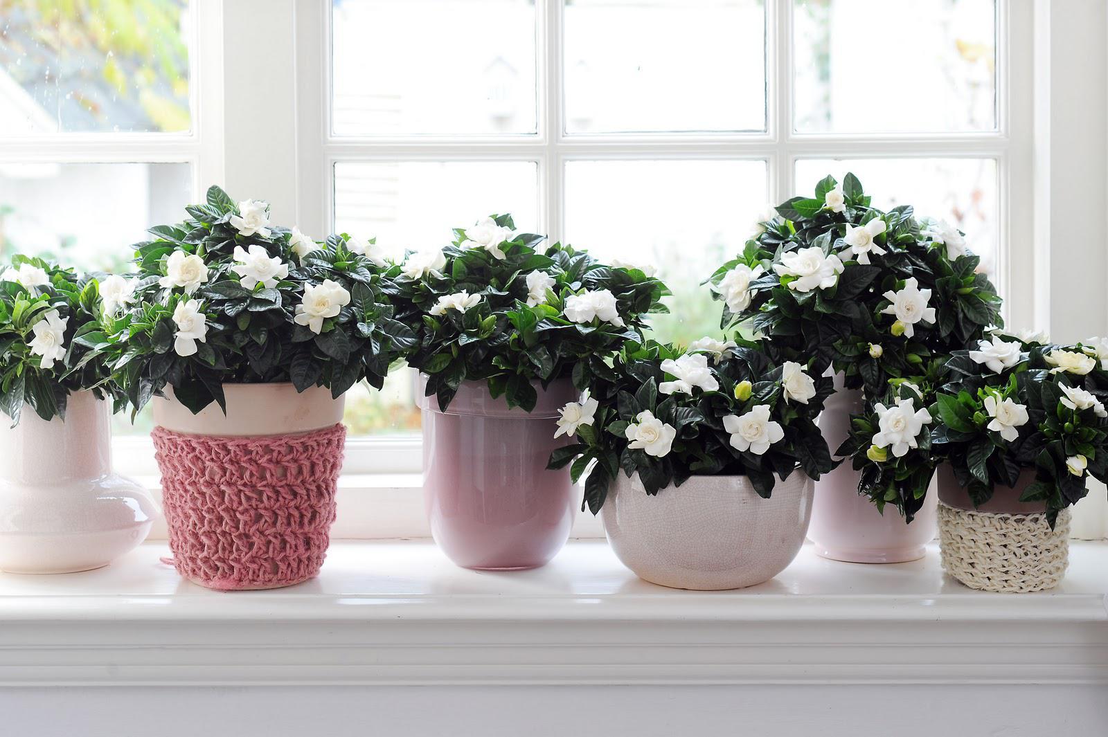 Устраиваем миниатюрный сад у окна из некапризных домашних растений