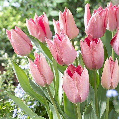 Эффектные композиции из тюльпанов