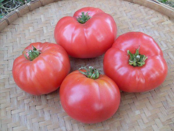 Самые урожайные сорта розовых томатов