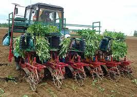 Особенности и назначение сельскохозяйственных рассадопосадочных машин