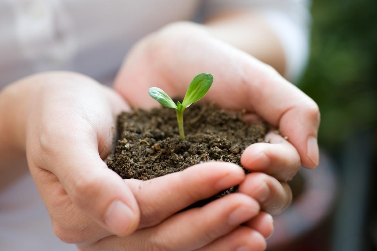 Почвогрунт для рассады – основные компоненты и достоинства
