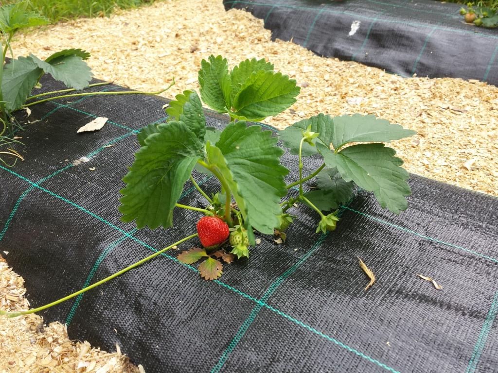 Современный укрывной материал – эффективная защита урожая