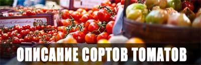 Раздел с описанием сортов томатов